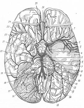 Внутренняя сонная артерия