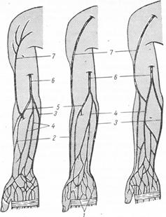 Вены верхней конечности